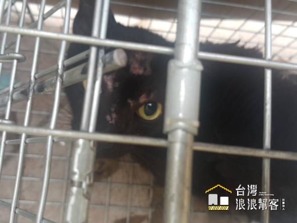 護理之家黑貓TNR
