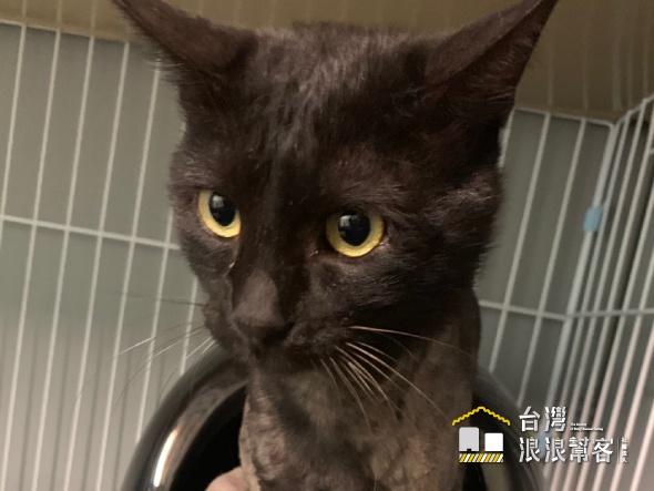 橡皮筋勒傷全身皮開肉綻的黑貓