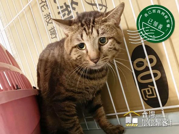 [已領養] 廢棄屋23隻棄貓中的大頭